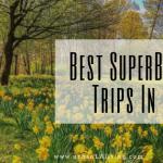 The Best Super Bloom Trips in LA in 2020